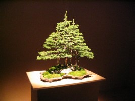 The Bonsai Art of Japan